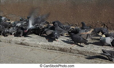 pigeons on the sidewalk 2