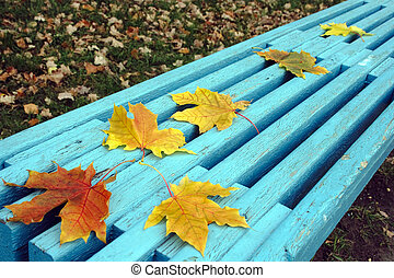 autumn maple leaves on bench - autumn begining yellow leaves...