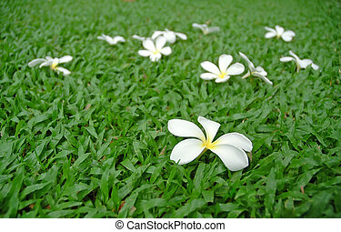 white flower on green grass