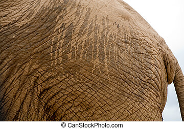 Elephant in Addo Park - Detail of skin elephant in Addo...