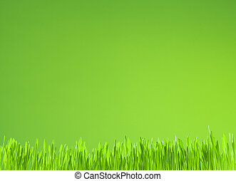 clean fresh grass growth on green background