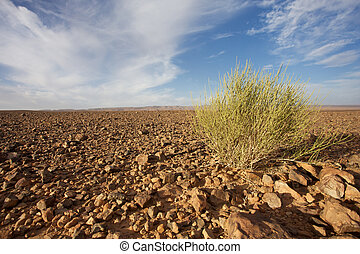 Wild landscape in Morocco - View of a wild landscape and...