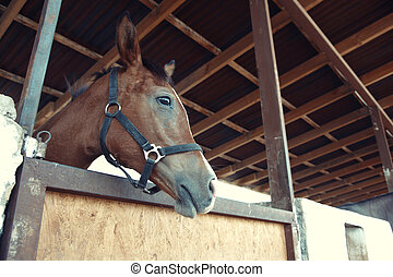 Horse - Headshot of the horse in the stable. Horizontal...