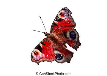 蝴蝶, 白色, 背景