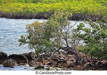 Biscayne Bay Shore - Biscayne Bay