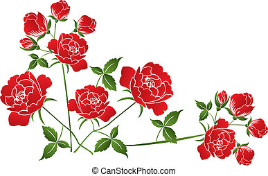 Red roses on white - Beautiful red roses on white background...