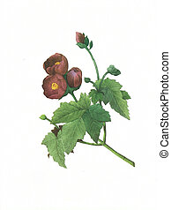 flower antique illustration malva