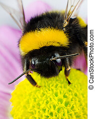 Bumblebee Pollination on Yellow Flower Vertical Composition