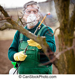 Using chemicals in the garden/orchard: gardener applying an...