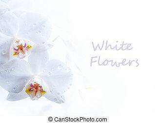 spring white flower on white background