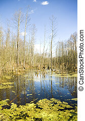 deep bog in a thicket.Nature composition.