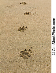 dogs footprints on the beach