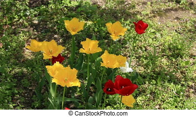 Tulip flowers on the grass