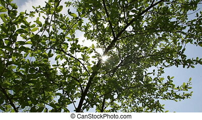 Under tree crown - Sunlights trough under tree crown