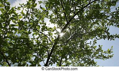 Under tree crown - Sunlights trough under tree crown