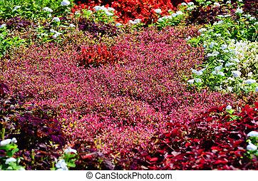 Flower garden in autumn. Taken under the bright light of the...