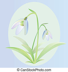 Snowdrop flower, good for postcards and other illustrations