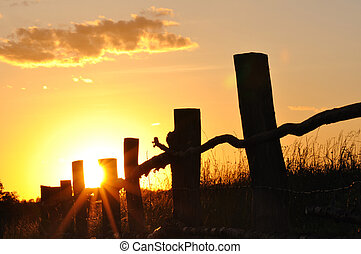 Summer sunset with wooden fence