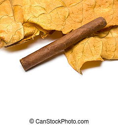 cigar and leaf - Close-up on the cigar tobacco leaves with...