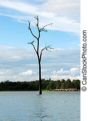 Lonely Dry Tree - A dry tree within a lake in a public park...