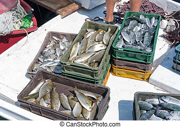 fisher bringing their catch home