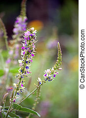 Purple flower in grasses