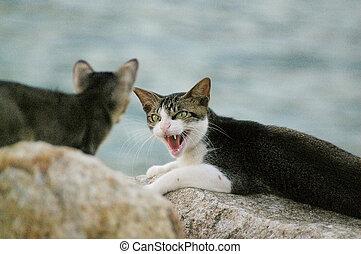 un, enojado, gato