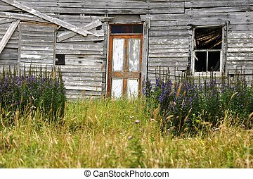 abandoned house Newfoundland - abandoned house in the...