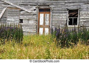 abandoned house Newfoundland - abandoned house in the...
