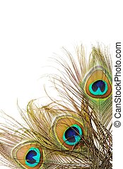 Peacock feather background - Three Beautiful peacock...
