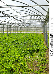 Greenhouses - Agricultural production in greenhouses