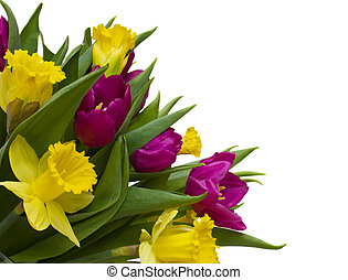spring bouquet - bouquet of tulips and daffodils isolated on...