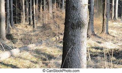Lumberjack, falling tree work movie