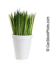 Green grass and Disposable cup