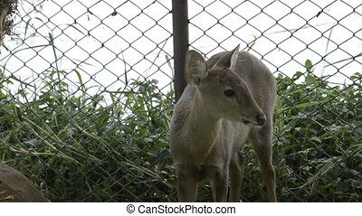 deer in zoo