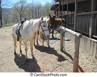 Horses tied to hitching posts - 3 horses tied to hitching...