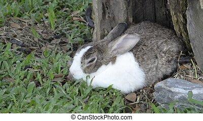 rabbit in zoo