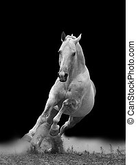 fehér, Ló