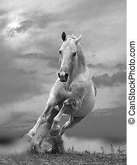 fehér, Ló, napnyugta