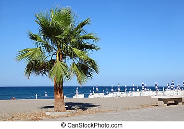 big beautiful green palm tree growing at seashore. striped...