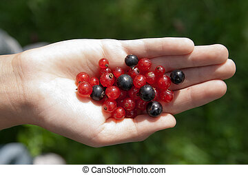 Berries in hand of a child