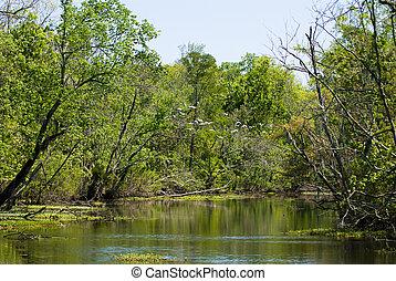 luisiana, Brazo pantanoso de un río