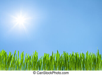 grass growth on sky blue with sun