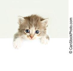 Kitten banner isolated on white
