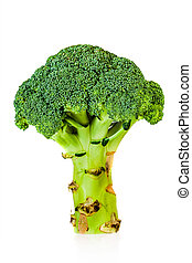 Broccoli (Brassica silvestris) - Broccoli on a white...