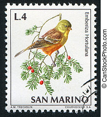 Ortolan bunting - SAN MARINO - CIRCA 1972: stamp printed by...