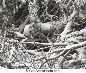 stack snow pine branches
