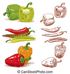 Peppers - Set of various peppers. Vector illustration.