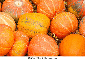 Lot orange autumn pumpkin scattered on dry grass