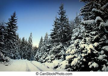 Winter fir-tree forest